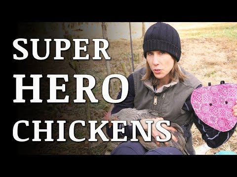 Our Chickens Got SUPERHERO Capes! (hen saddles)