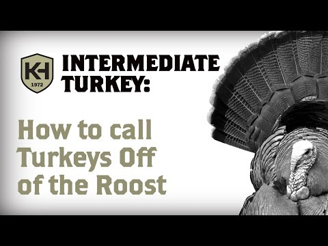 Calling Turkeys Right Off Of The Roost: Intermediate Turkey Calling Tips