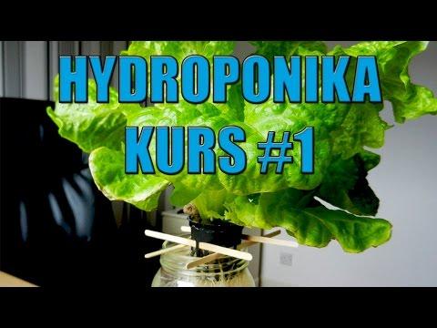 Hydroponika Kurs #1 Dlaczego uprawa w wodzie ?