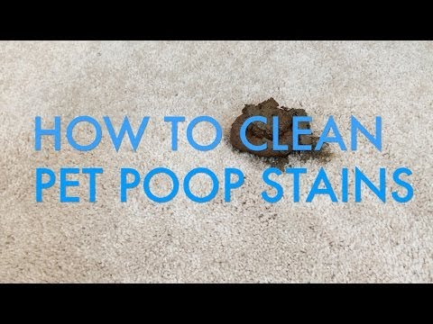 How to Clean Pet Poop Stains from Carpet | Life is Clean