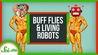 How to Get Buff Without Exercise (If You're a Fly)   SciShow News