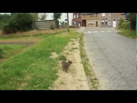 Walking my cat