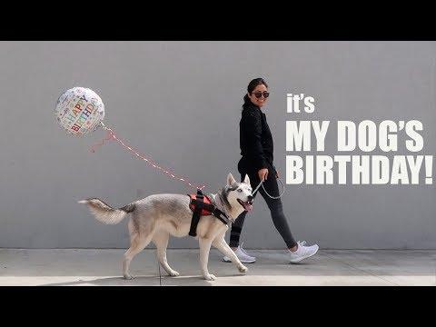 Celebrating My Siberian Husky's Birthday | Melissa Alatorre