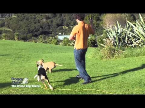 Training a dog to fetch
