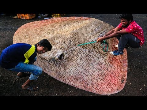 Xxx Mp4 Live Big Size Marble Ray Fish Cutting Indian Fish Market 2019 Fisherman 3gp Sex