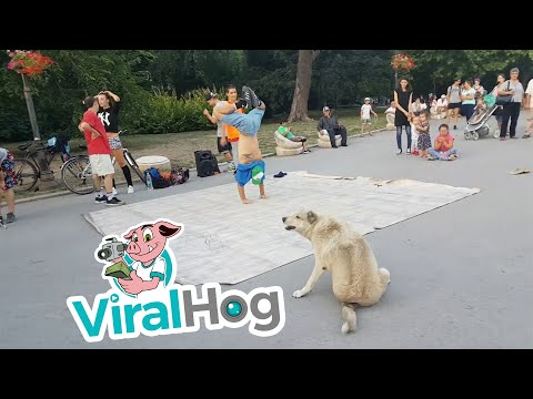 Breakdancing Doggy Joins Performance || ViralHog