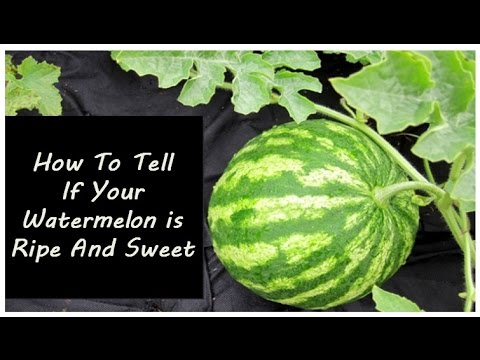 How To Tell If Your Watermelon is Ripe And Sweet