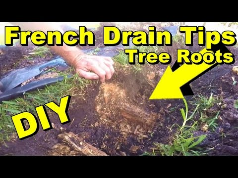 Frecnh Drain Tip, How to Remove Tree Roots,