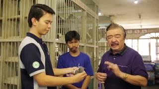 Alagang Magaling S6 EP9   PIGEON RACING 101 BREEDING PART 2
