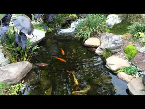 How To Get Rid of Algae In Pond | Pond Scum | Baltimore County, MD | Harford County, MD