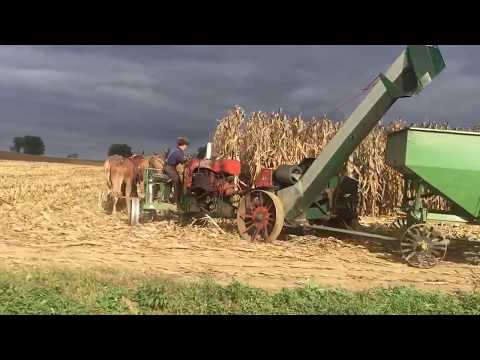 Amish man picking corn with mules. Lancaster co.