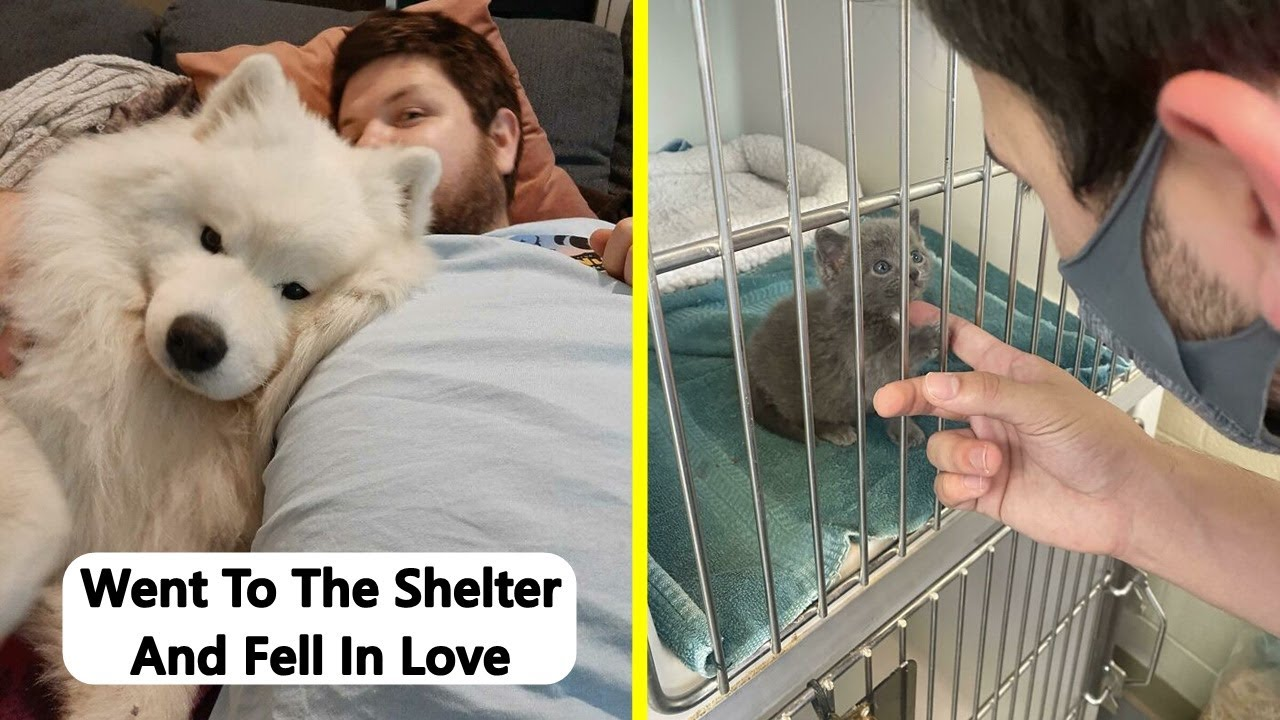 Wholesome Rescue Pet Pics To Heal Your Soul (July Edition)