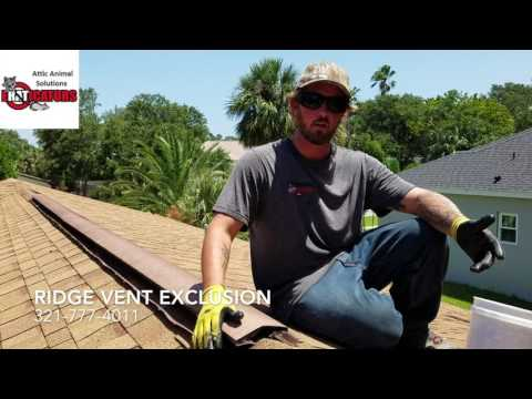 How To Get Rid Of Rats - Ridge Vent Exclusion