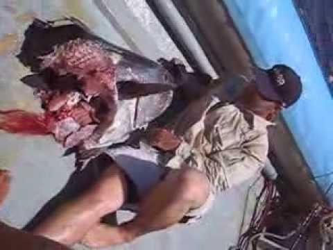 Giant DogTooth Tuna Eaten by HUGE shark