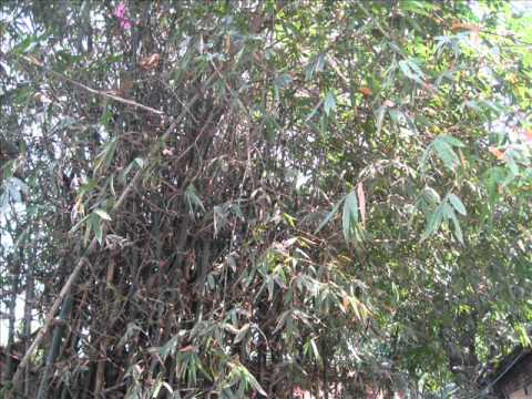 Air Pollution Remedial Plants