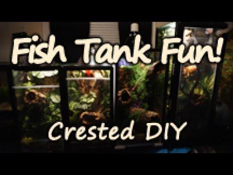 Crested DIY #3 - Fish Tank to Terrarium