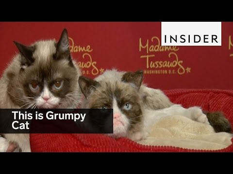 This is grumpy cat