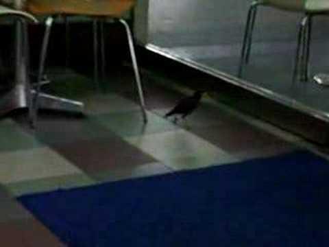 Little birdy in Macdonald