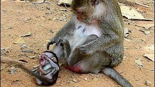 Break Heart When See Baby Hurt, Why Bad Mum Fight Baby Monkey Cry Very Loudly?