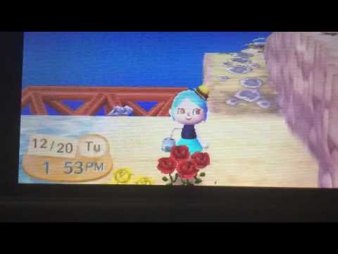 How to get orange rose in animal crossing new leaf