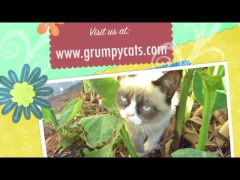 Grumpy Cat Meows!