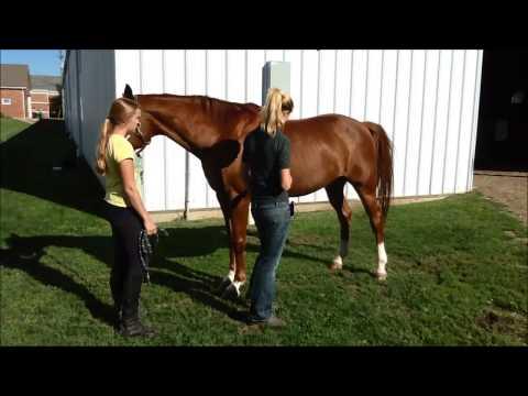 Horse Health Check