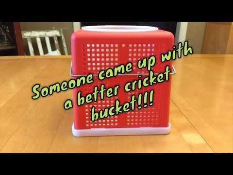 Fishing With Crickets? Best Cricket Bucket Ever!!!