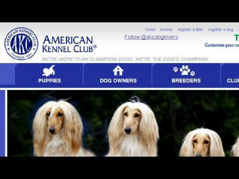 Qualifications For AKC Registration