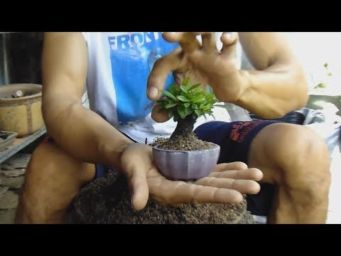 how to grow mini trees , rapid prototyping bonsai tree
