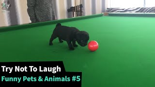 The Funniest Pet Animal Videos  - TRY NOT TO LAUGH 😂 #5