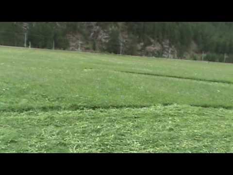 Cutting Hay - Swiss Style