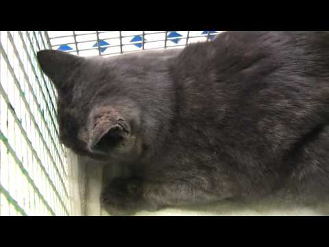 Gabriele Surgery: Waking up after spaying