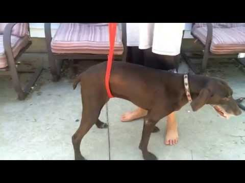 How to make a home made harness