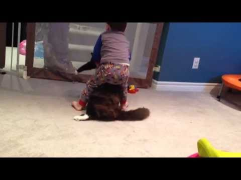 Toddler and cat wrestle