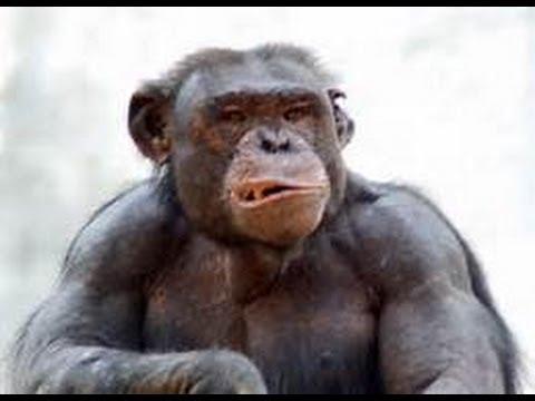 Introducing Egore: Bad Monkey???