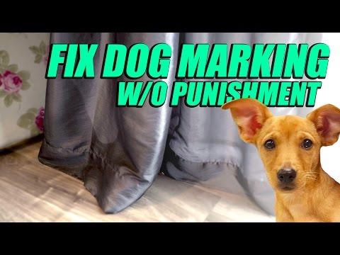 Fix Dog Marking Behavior Problem - No Punishment Training Method