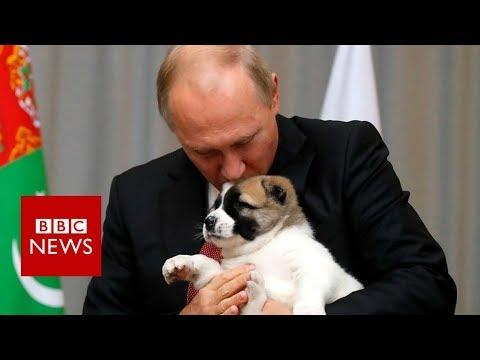 Putin got a puppy from Turkmenistan for his birthday - BBC News