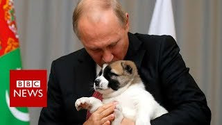 Putin got a puppy from Turkmenistan for his birthday - BBC News