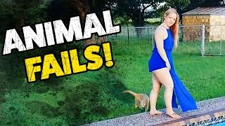 ANIMAL FAILS!   The Funniest Pet Clips On The Web   December 2018