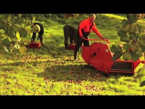 Cider apple harvesting and cider pressing at Butford Organics Herefordshire