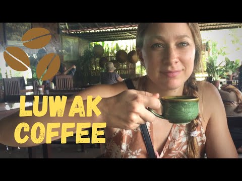 TRIP TO BALI - TRYING THE WORLD'S MOST EXPENSIVE COFFEE [Kopi Luwak] 🙀💸