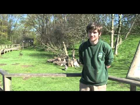 Blackpool Zoo Documentary.mov
