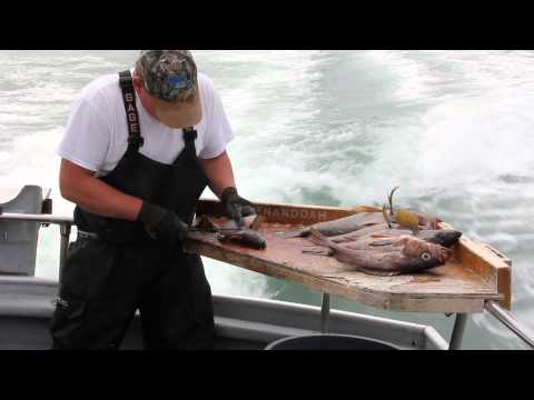 How to filet a rock fish in 10 seconds