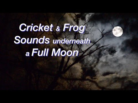 Cricket & Frog Sounds underneath a Full Moon