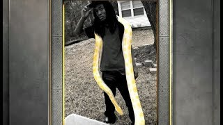 My Anaconda Don