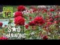Ngắm thiên đường hoa hồng cổ của nữ tỷ phú 9X I VTC16