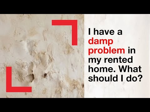 I have a damp problem in my rented home. What should I do?   housing advice   Shelter
