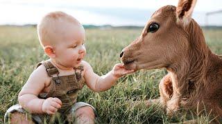 El Momento Más Divertido Entre Bebés Y Vaca #3 👶🐮 Compilación De Bebés Divertidos