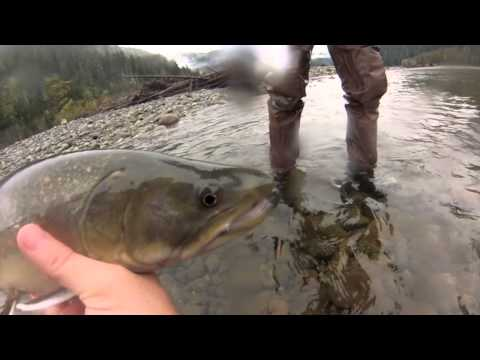 Winter Fly Fishing for Bull Trout in Squamish, British Columbia