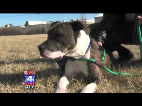Micro Chip Helps Put Dog on the Path to Home